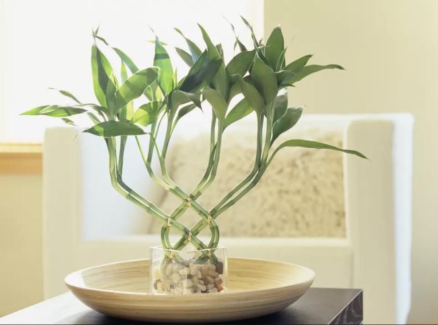 ¿Que es el Feng Shui y como puede mejorar mi hogar?